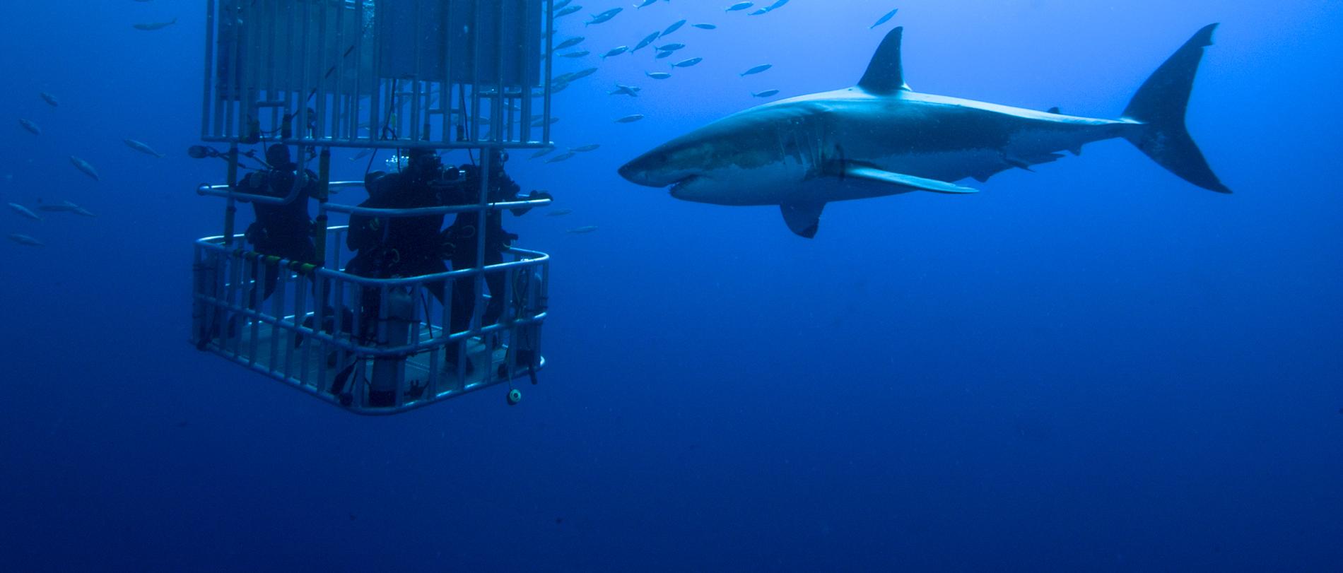 Week22_3_Shark-Cage1