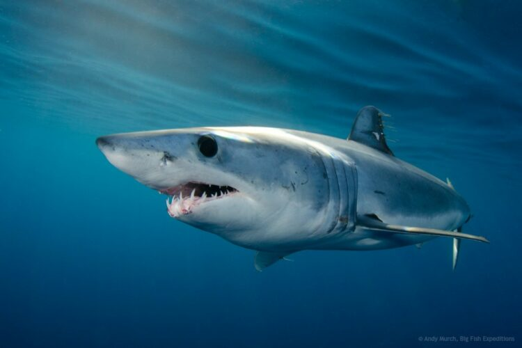 The Types of Sharks You Find in False Bay